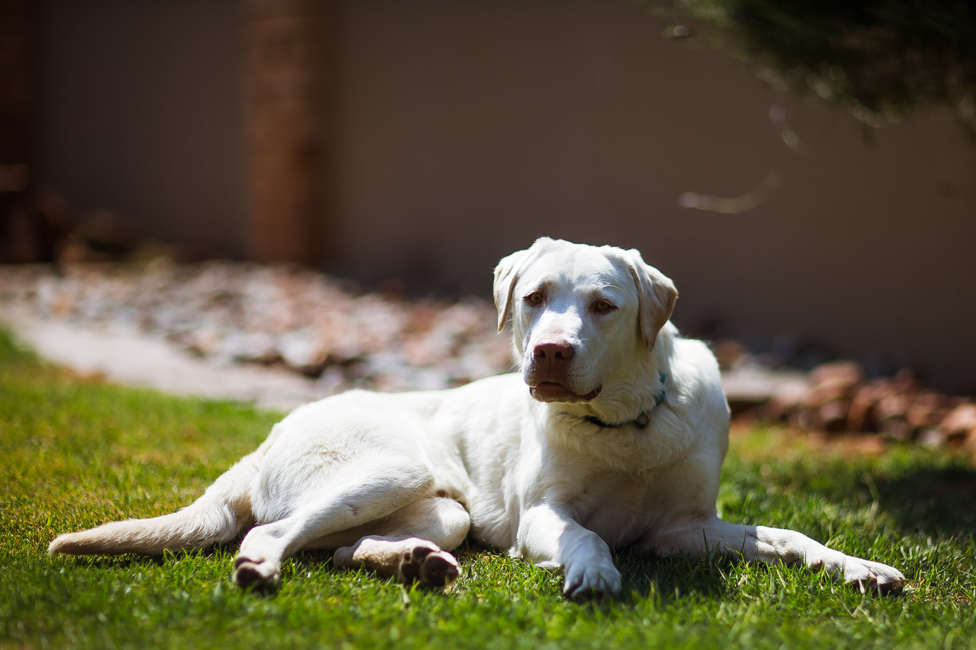 We got a dog – Choccy / Chewbacca