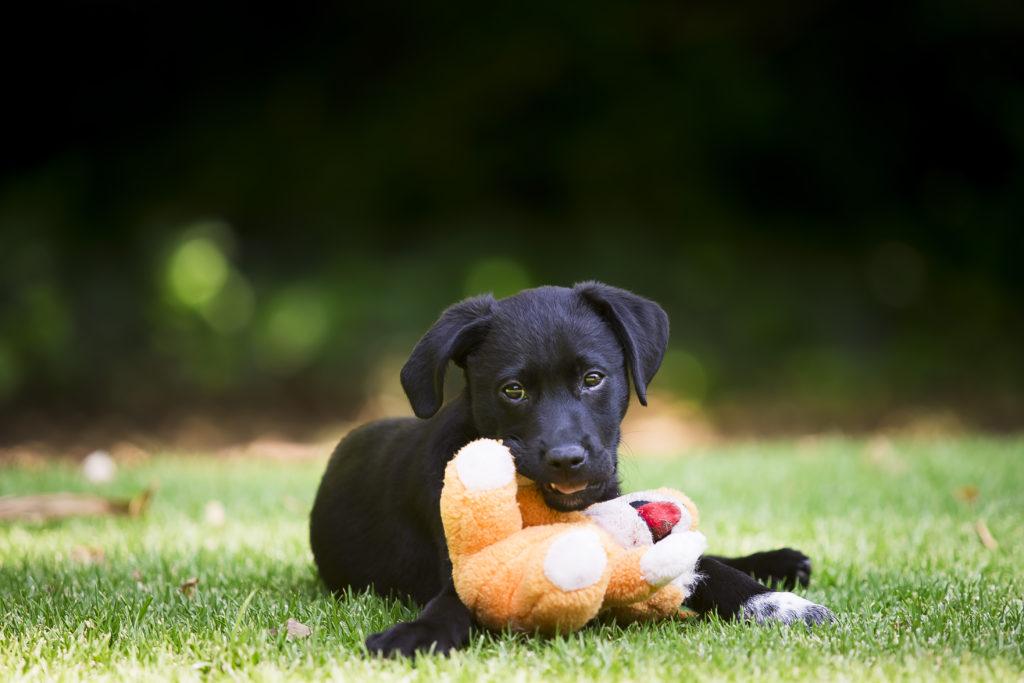 Finn Puppy Shoot