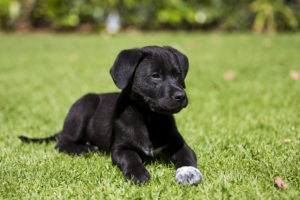 Dog lying on grass looking alert
