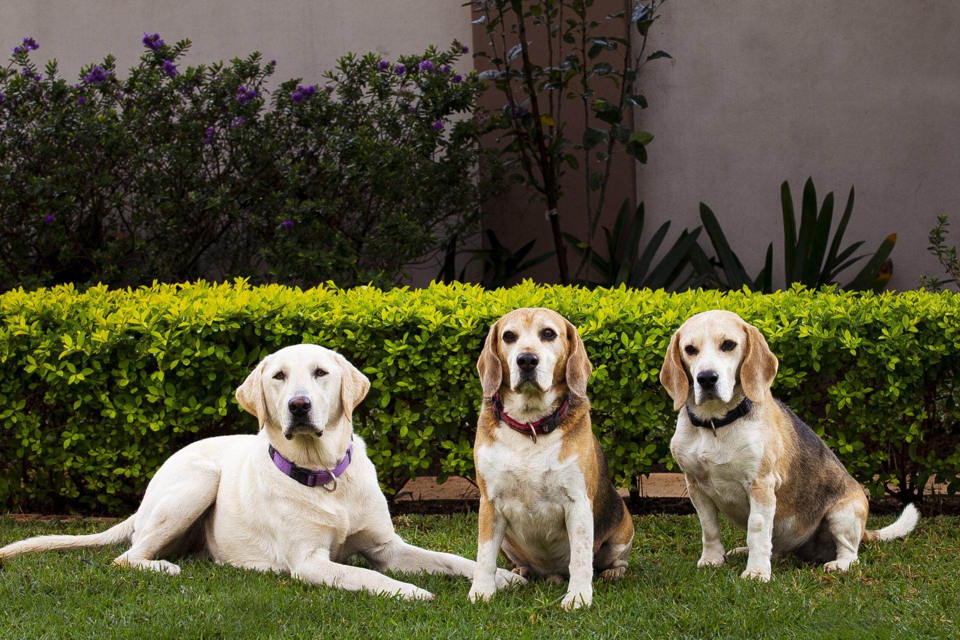 Amber, Ben & Ollie's Dog Shoot